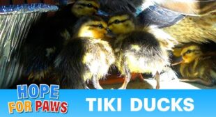 I can't believe the mom followed the babies into a Tiki Bar! This is true love.