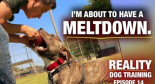 I'm about to have a meltdown. [Reality Dog Training EP 14]