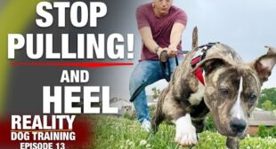STOP PULLING & Heel [Reality Dog Training Ep 13]