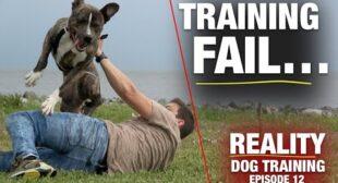 Watch My Training NOT WORK! [Reality Dog Training Ep. 12]