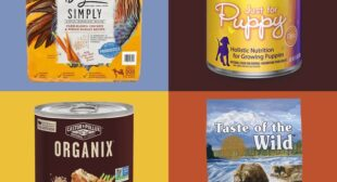 11 Best Natural Dog Foods for Every Age and Size