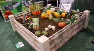 Pricing Guide: How Much Do Raised Garden Beds Cost?
